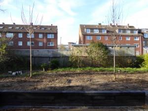 Ersatzbepflanzung und hoffentlich bald auch Sichtschutz