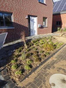 Vorgarten (leider nur zur Hälfte) bepflanzt